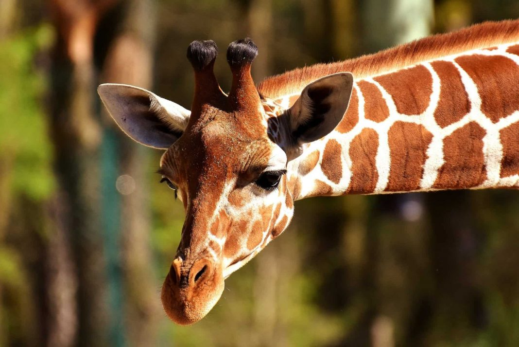 Looking for the best zoo in Texas? We got you covered!