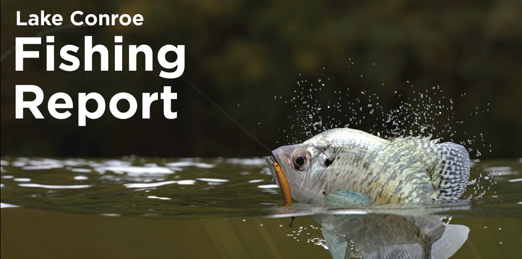conroe fishing report